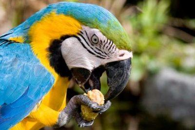 alimentacion de aves domesticas