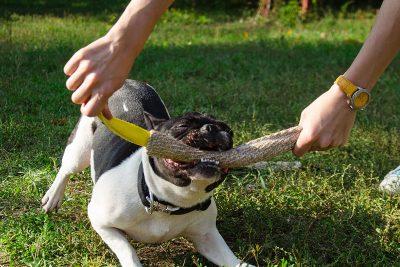 mordedores para perros