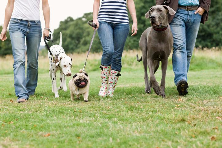 Accesorios para pasear perros en Tienda Animalia