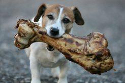 Huesos de jamón, lo mejor para tu perro