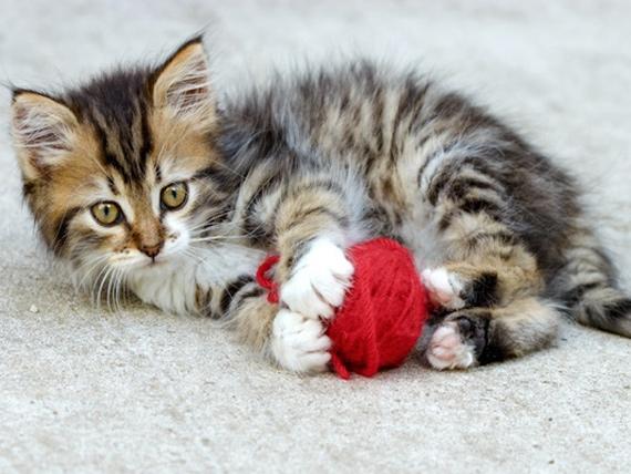 Beneficios de los juguetes interactivos para gatos