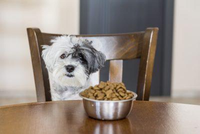 La dieta es importante para la alimentación del perro