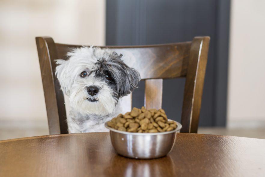 Alimentación del perro I