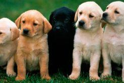 La mejor protección para perros