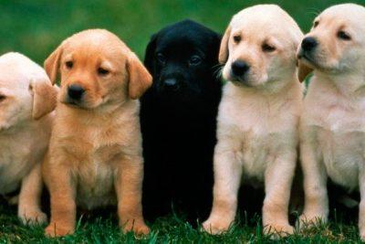 protección para perros