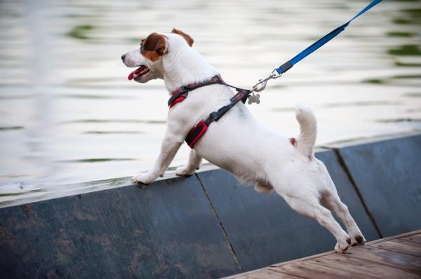 perros nerviosos con correa
