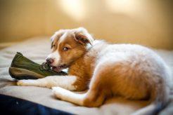 ¿Qué es la inhibición del mordisco en perros?